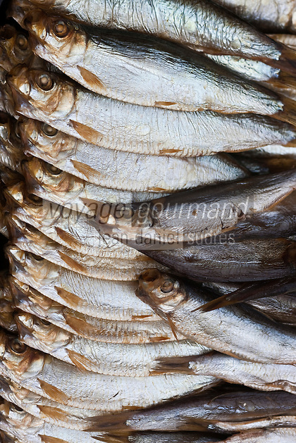 Europe/France/Nord-Pas-de-Calais/59/Nord/Flandre/Grand-Fort-Philippe : A la saurisserie Nathalie Dutriaux - Spécialités de produits fumés de la mer: Sprats fumés //  France, Nord, Flanders, Grand Fort Philippe, Nathalie Dutriaux At the smoked fish, smoked specialties from the sea, smoked sprats