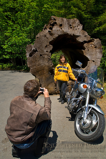 Motorcyclist tourist couple taking snapshot pictures at roadside attraction, Avenue of the Giants, Humboldt County, California