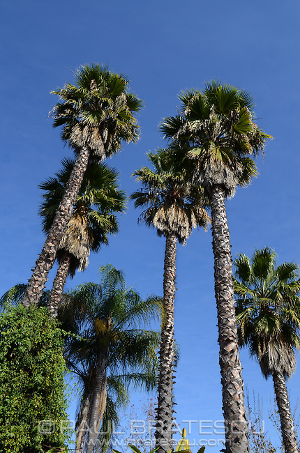 Palm Trees, California