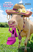 Samantha, ANIMALS, REALISTISCHE TIERE, ANIMALES REALISTICOS,  photos+++++,AUKPSZ65,#A# , funny