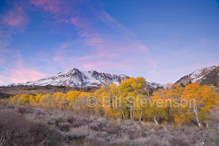 A photo of yellow fall aspen trees beneath a snowy mountain at sunrise in the Sierra mountains of California
