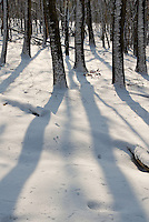 Late morning light creates tree shadows at Waterfall Glen Forest Preserve in DuPage County, Illinois