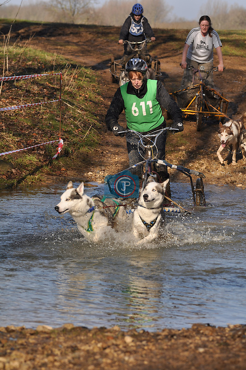2010 Siberian Husky Racing at Grimsthorpe Castle in Lincolnshire