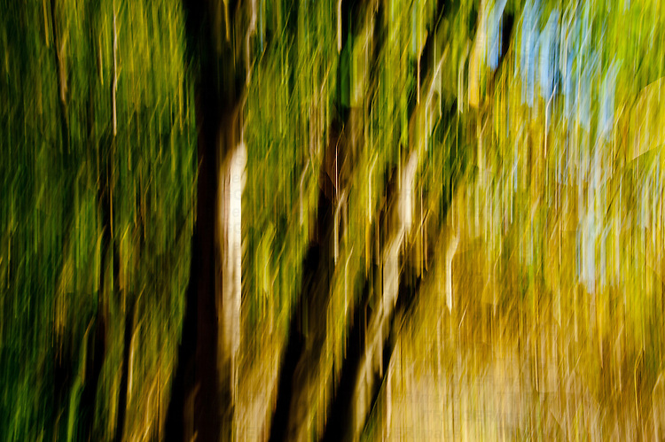 Intentional camera movement of trees in the autumn time