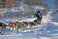 Saturday, February 24th, Knik, Alaska.  Jr. Iditarod musher Jesse DeLoach on the trail shortly after leaving the Knik start
