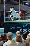 DEADWOOD, SD - JUNE 15, 2013:  Riley, a yellow lab, leaps during the Dock Dogs competition Saturday at Wild Bill Days in Deadwood, S.D. Riley's handler is Brenda Halverson of Denver.  (Photo by Richard Carlson/dakotapress.org)