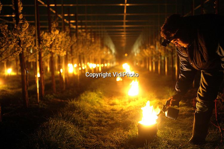 Foto: VidiPhoto..KESTEREN - In alle vroegte moesten vrijdagmorgen de ruim 1300 vuurpotten bij kersenteler Van Capel in Kesteren aangestoken worden om te voorkomen dat de bloesemknoppen door de vorst werden aangetast. Van Capel heeft 3,5 hectare kersen. De vuurpotten zorgen er voor dat de temperatuur onder de fruitbomen met een paar graden stijgt. Slechts enkele Nederlandse fruittelers gebruiken dit systeem, dat overgewaaid is uit de druivenstreken, omdat het vrij kostbaar is.