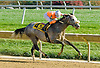 Win Willy winning The DTHA Governors Day Stakes at Delaware Park on 10/20/12