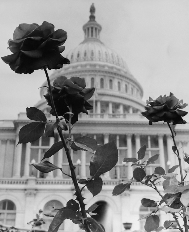 Exterior of Capitol Hill. (Photo by CQ Roll Call via Getty Images)