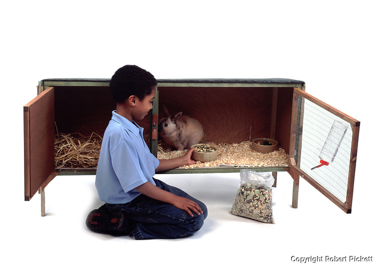 Young Boy, aged 10 years old, feeding rabbit with dry food in hutch, studio, white background, cut out, pet