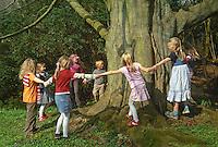 Kinder umfassen einen alten, dicken Baum, Buche, tanzen Hand in Hand um den Stamm