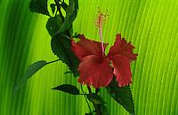 Asian-FLORA-tree-plant-flower