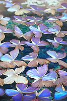 Butterflies in glass
