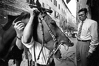 © Francesco Cito / Panos Pictures..Siena, Tuscany, Italy. The Palio. ..A horse is checked before the race by the captain of the Nicchio contrada (city district)...Twice each summer, the Piazza del Campo in the medieval Tuscan town of Siena is transformed into a dirt racetrack for Il Palio, the most passionately contested horse race in the world. The race, which lasts just 90 seconds, has become intrinsic to the town's heritage since it was first run in 1597...