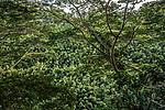 Cool Foliage