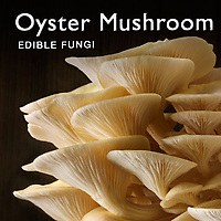 Oyster mushrooms | Fresh Oyster Mushrooms Food Pictures, Photos & Images