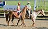 Golden Odessy before The Delaware Park Arabian Juvenile Filly Championship (Gr 2) on 11/1/11