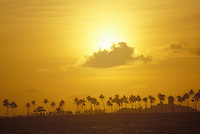 Sunset across the bay from old San Juan, Puerto Rico with a stand of palm trees on the shoreline.