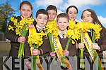 Pictured preparing for their daffodil wrapping day in aid of the Irish Cancer Society at Lissivigeen National School, Killarney to be held today, Thursday, were Lauren O'Sullivan, Aidan Keane, Adam Hurley, Hary Knoblock, Emma Quirke and Orla Lehane.