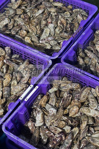France, Ille-et-Vilaine (35), Cancale,Franck Vallerie ostréiculteur: Les Huîtres de Céline - Huîtres creuses  de Cancale //France, Ille et Vilaine, Cancale,  Oyster farm: Les Huîtres de Céline: Cancale oysters, local oysters