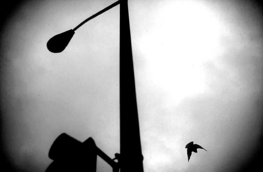 (photo by Pico van Houtryve)