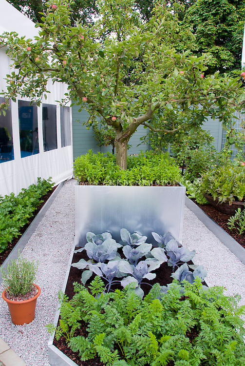 Vegetable garden with carrots, cabbage, apple fruit trees, modern galvanized raised beds, clean white pebble stone pathways, privacy fencing in blue