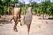 Amazon, Brazil. Cayman alligator skins hanging over a line to dry.