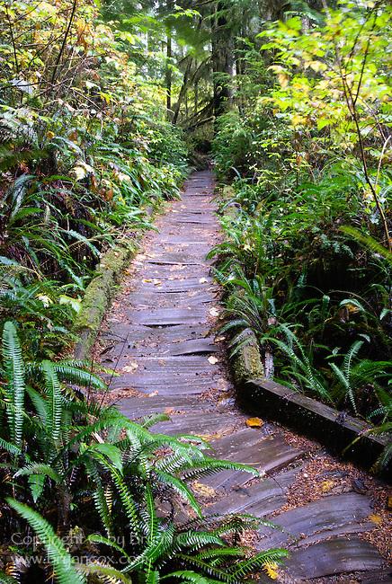 Cedar plank pathway, Lake Quinault, Washington