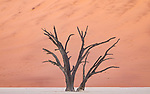 Petrified Tree And Dunes In The Deadvlei Area, Sossuvlei.