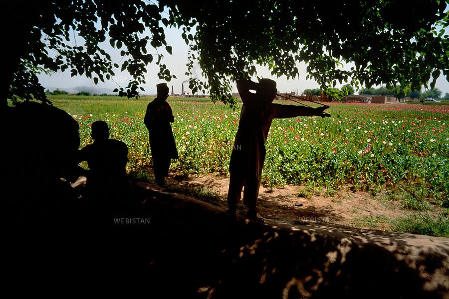 2004. Poppy fields around Jalalabad. Champs de pavots à la périphérie de Jalalabad.