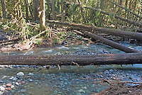 "Ipsut Creek Ranger Cabin after the November, 2006 flood in Mount Rainier National Park, Washington State. Compare to ""before"" image..reference point is stubby mossy branch in left side of frame."