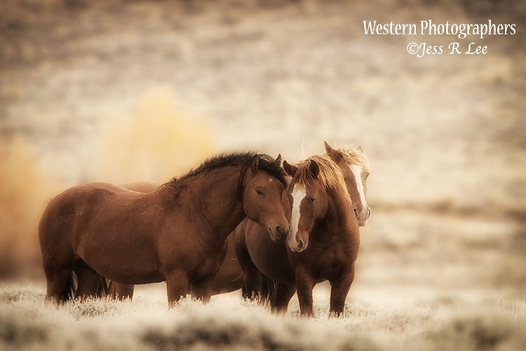A photo of two wild horses.
