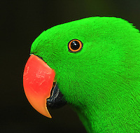 BALI-birdpark-Indonesia. 178 images