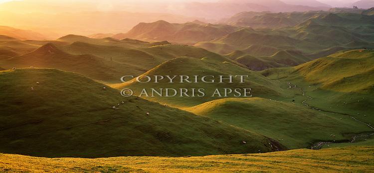 Farmland in the Manawatu Region. New Zealand.