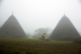 INDONESIA, Flores, Wae Rebo Village, a woman walks between two thatched traditional residences also called Mbaru Niang