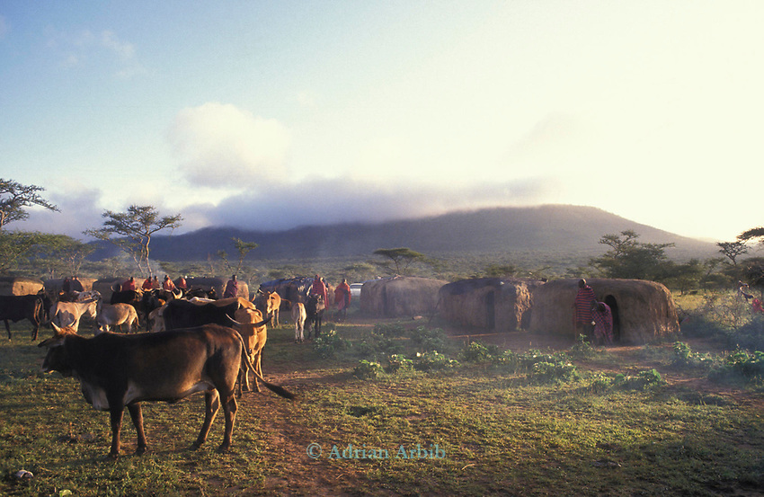 A Maasai moran on the morning of their initiation into manhood.  <br /> They will have stayed in this manyatta for several weeks with their age set.  <br /> Each man will then search for a wife and set up his own family Manyatta.