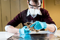 Belgium. Brussels. London. 17th November 2015<br /> (Name need) prepares an ancient dog skull for cutting. A small piece will be cut and then sent for DNA testing.<br /> Andrew Testa for the New York Times