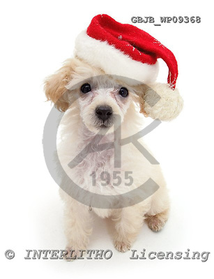 Kim, CHRISTMAS ANIMALS, photos, GBJBWP09368,#XA# stickers