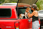 Chris Artelger gets a kiss from one of her beagles as she puts them in the back of her SUV after an outing in Hermann Park.  (Saturday, April 26, 2008, in Houston. ( Steve Campbell / Chronicle).