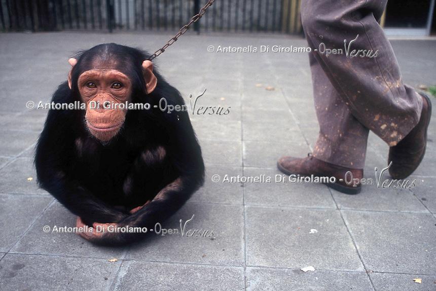 Animali.Animals...