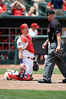 Memphis Redbirds catcher Carson Kelly (19) talks with home plate umpire Ryan Blakney during a game against the Iowa Cubs on May 29, 2017 at AutoZone Park in Memphis, Tennessee.  Memphis defeated Iowa 6-5.  (Mike Janes/Four Seam Images)