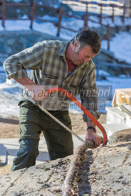 Italie, Val d'Aoste, Valtournenche : Fermier coupant son bois //  // Italy, Aosta Valley, Valtournenche: Farmer cutting his wood
