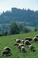 Europe/France/Midi-Pyrénées/46/Lot/Loubressac: Agneaux fermiers du Quercy - Label Rouge
