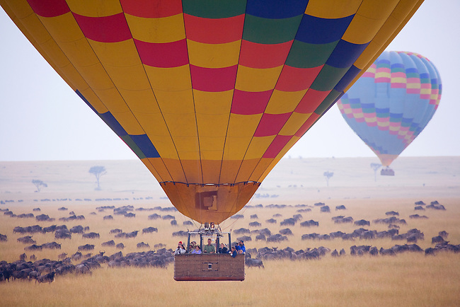 Africa, Kenya, Masai Mara. Ballooning in the Masai Mara over the wildebeest migration.