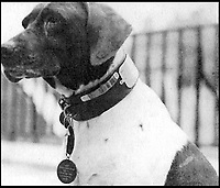 BNPS.co.uk (01202 558833)<br /> Pic:   ImperialWarMuseum/BNPS<br /> <br /> Judy, the only animal registered as a prisoner of war who returned from captivity to have her bark recorded on BBC radio.<br /> <br /> The remarkable stories of the 71 heroic animals who have received the pet equivalent of the Victoria Cross are told in a new book.<br /> <br /> They include a dog who dragged his drowning handler to safety in a torrent of shells and machine gun fire and a carrier pigeon which flew 120 miles to raise the alarm for a bomber crew who had crashed into the sea.<br /> <br /> Their courageous acts, and others involving dogs, cats, pigeons and horses, feature in history teacher Philip Hawthorne's book, The Animal Victoria Cross: The Dickin Medal.