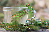 Fichtennadel-Tee, Fichtennadeltee, Fichten-Tee, Fichtentee, Tee aus Fichtennadeln, Heiltee, Kräutertee, Erkältungstee, spruce needle, spruce needles, herb tea, herbal tea, tea. Gewöhnliche Fichte, Fichte, Rot-Fichte, Rotfichte, Picea abies, Common Spruce, Spruce, Norway spruce, L'Épicéa, Épicéa commun