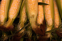 "Ears of ""peaches and cream"" sweet corn at an Ontario farmer's market."