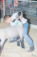 Children take part in the Intermediate 4-H Sheep Showmanship competition in the Sheep Barn at the Iowa State Fair in Des, Moines, Iowa, on Sun., Aug. 11, 2019. The competitors are judged on their ability to display and control the sheep rather than on the characteristics of the animals themselves.