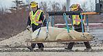 Canada, Manitoba, Churchill, polar bear (Ursus maritimus) , nuisance bear relocation
