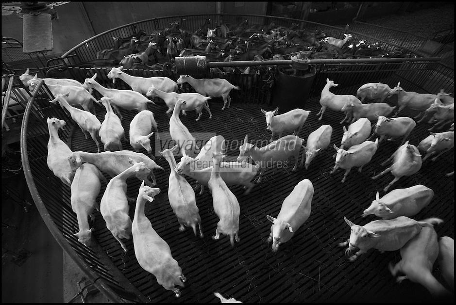 Europe/France/Poitou-Charentes/79/Deux-Sèvres/Villemain: Fromagerie à la ferme de Paul Gorgelet: Le Petit Boisselage -La Chèvrerie -  La traite des chèvres